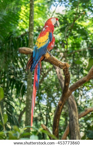 Colorful Scarlet Macaw parrot  on the Jungle