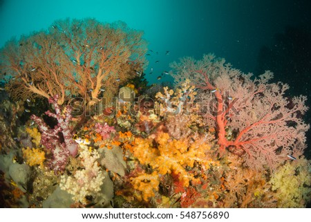 Colorful seafans and corals