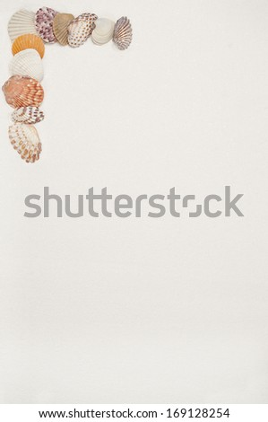 Colorful seashells arranged on white sand. Copy space for menu, invitation or stationary.