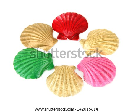 Colorful seashells, isolated on white