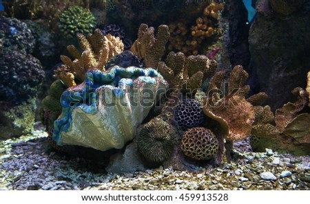 Colorful shell under the ocean - stock photo