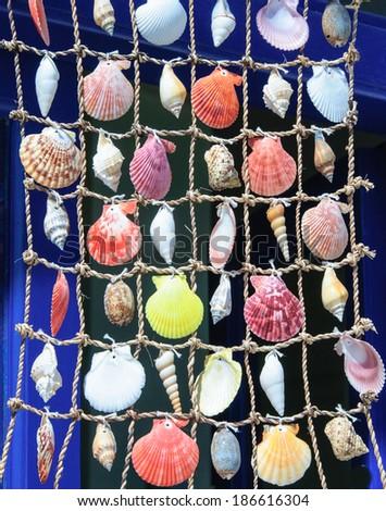 Colorful shells background - stock photo