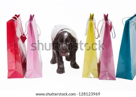 Colorful shopping bags and puppy dog