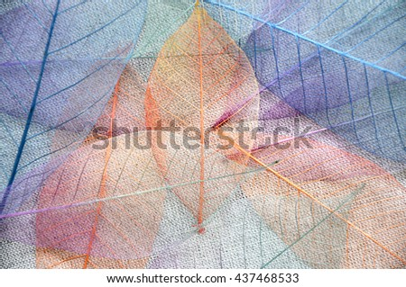 Colorful skeleton leaves on background