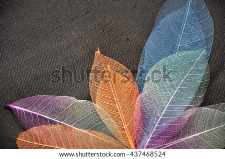 Colorful skeleton leaves on dark fabric background - stock photo