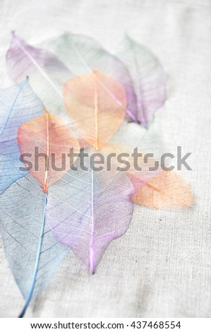 Colorful skeleton leaves point to you - stock photo