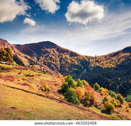 Colorful slopes of the Caucasus Mountains. Sunny autumn scene in the Upper Svaneti, Mazeri village location, Georgia, Europe. Artistic style post processed photo.