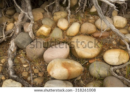 Colorful, smooth stones in gravel among tree roots, shore of Jackson Lake, Grand Teton National Park, Wyoming. - stock photo