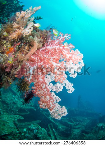 Colorful soft coral and fish on the WW2 Shipwreck the Liberty at Tulamben, Bali, Indonesia. - stock photo