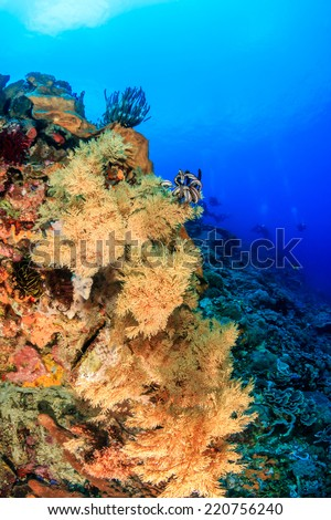 Colorful soft corals on a healthy tropical coral reef - stock photo