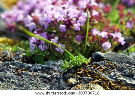 Colorful soft wild flowers