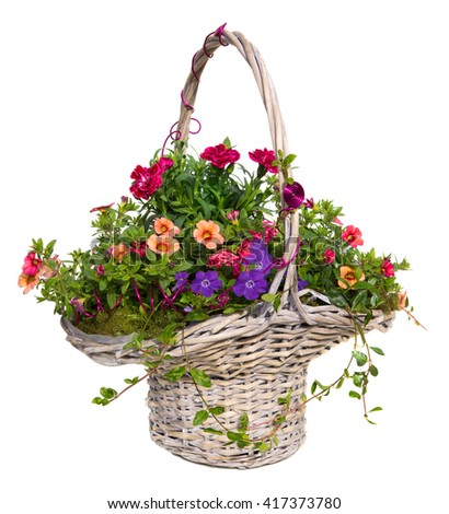 Colorful spring and summer flowers with many blossoms are beautiful decorated in a basket, on white. - stock photo