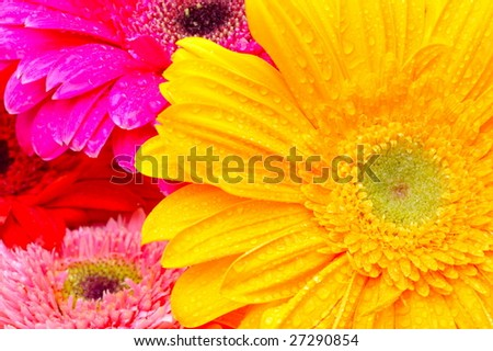 colorful spring flowers - stock photo