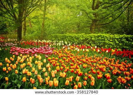 Colorful spring flowers and blossom in dutch garden Keukenhof, Netherlands, toned - stock photo