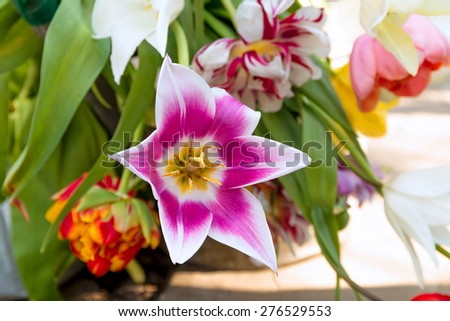 Colorful spring flowers bouquet different varieties stock photo colorful spring flowers bouquet different varieties of beautiful tulips mightylinksfo