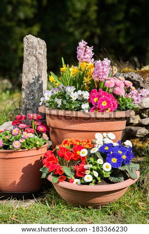 Colorful spring flowers in flower pots