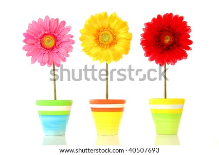 colorful spring flowers isolated on white background - stock photo