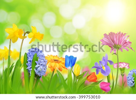 Colorful spring flowers on green natural background. - stock photo