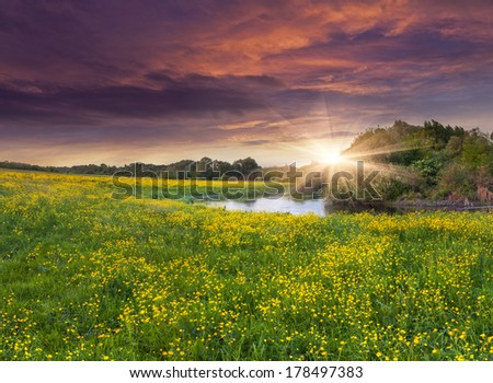 Colorful spring landscape in the summer with field of yellow flowers. Dramatic sunset.