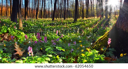 Colorful spring landscape with flowers - stock photo