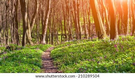 Colorful spring morning in the  forest.  - stock photo