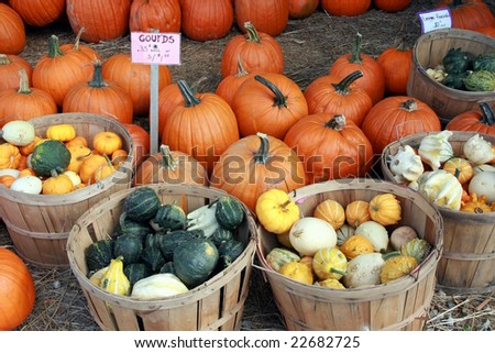 colorful squash and pumpkins at a farmers' market - stock photo