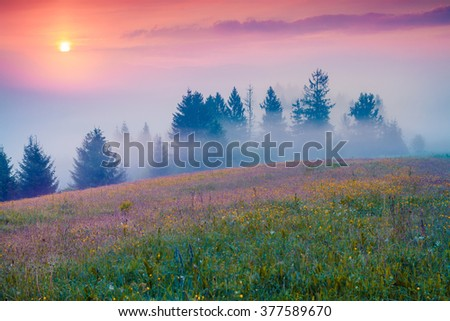 Colorful summer morning in the foggy mountain valley. Fresh grass on a meadow glowing first sunlight at sunrise. Borzhava range,  Transcarpathians, Ukraine, Europe. - stock photo