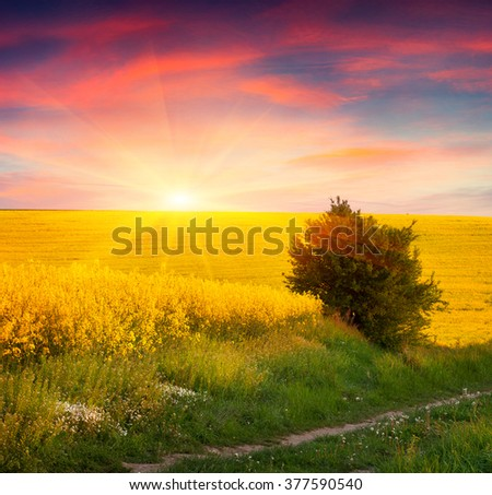 Colorful summer scene in the countryside. Sunrise on the field of blooming colza. Amazing landscape for advertisement using.