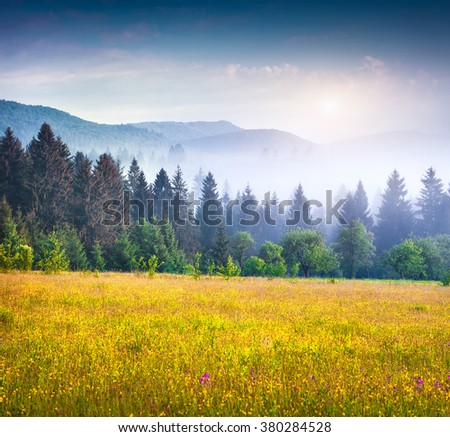 Colorful summer scene in the foggy mountain valley. Fresh grass on a meadow glowing first sunlight at sunrise. Borzhava range, Transcarpathians, Ukraine, Europe. - stock photo