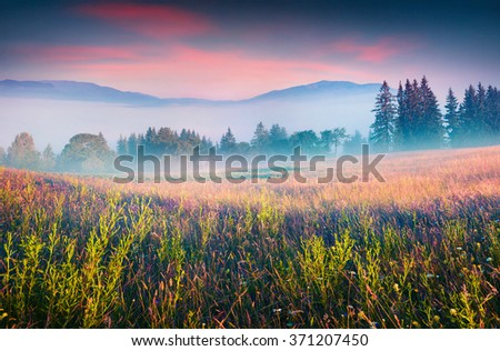 Colorful summer scene in the foggy mountain village. Fresh grass on a meadow glowing first sunlight at sunrise. Kvasy location, Transcarpathian, Ukraine, Europe. Instagram toning. - stock photo