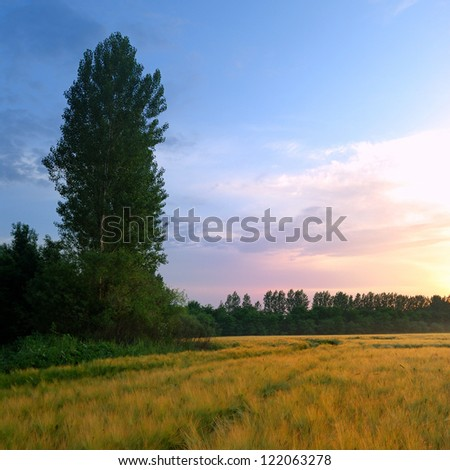 colorful summer sunrise at the field