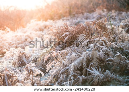 Colorful sunrise over meadow covered in frost crystals, vintage cross effect - stock photo
