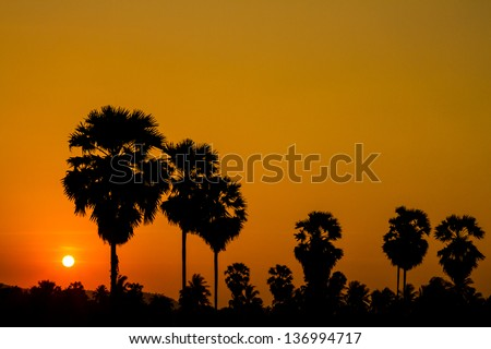 Colorful sunset behind palm tree over mountain