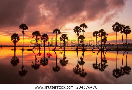 Colorful sunset or sunrise landscape with silhouettes of palm trees on Chau Doc city, Vietnam. Chaudoc city near Cambodia is famous tourist spots of the Mekong river tours. - stock photo