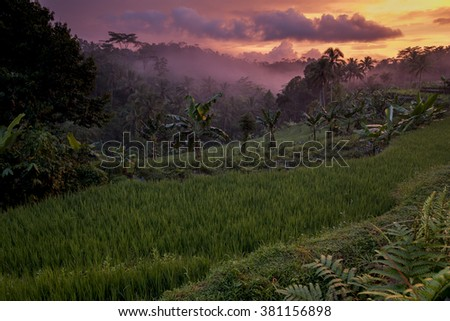 Colorful sunset over indonesian rainforest, Java, Indonesia - stock photo