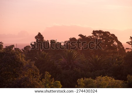 Colorful sunset with silhouetted trees in South Africa.  - stock photo