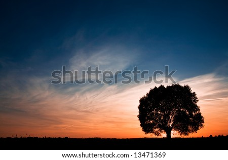 Colorful sunset with tree silhouette. Space for text. - stock photo