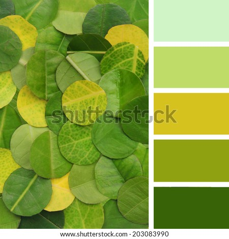 colorful texture of the leaves. Color palette swatches - stock photo