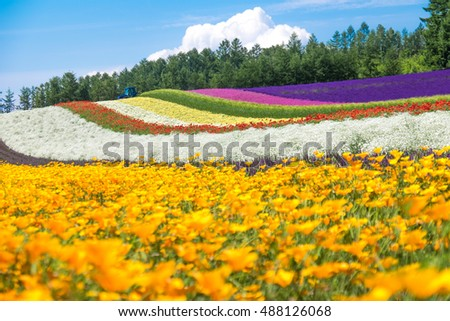 Colorful Tomita farm in the summer of Hokkaido with blurred of foreground flowers