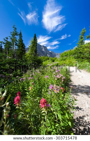 Colorful trail in Glacier National Park featuring red and purple wildflowers against a mountain backdrop