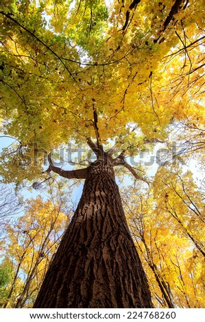 colorful tree branches in sunny forest, autumn natural background - stock photo
