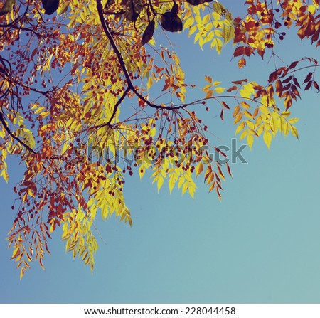 Colorful tree foliage in the autumn.  image is retro filtered