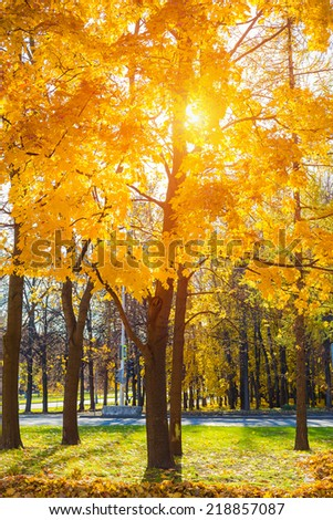 Colorful tree in the sunny autumn park