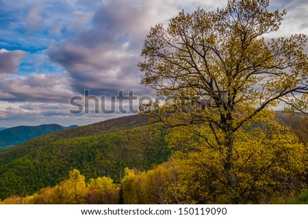 Colorful tree on Skyline Drive in Shenandoah National Park, Virginia. - stock photo