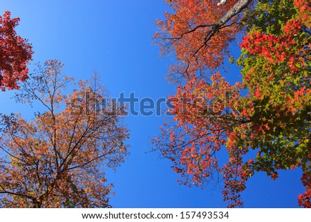 Colorful tree tops against a deep blue sky