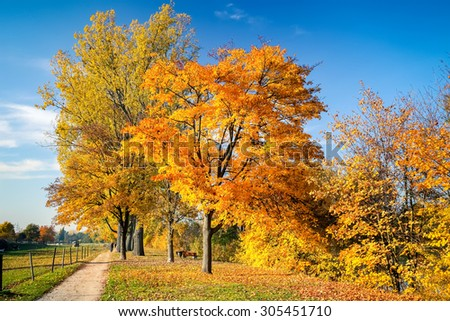 Colorful trees and blue sky in the autumn park - stock photo