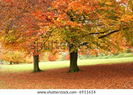 colorful trees in a park in fall