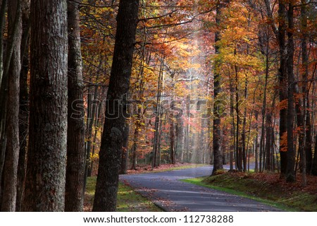 Colorful trees in Babcock  state park - stock photo