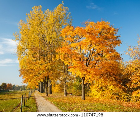 Colorful trees in the autumn park - stock photo