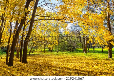 Colorful trees in the sunny autumn park